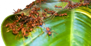 Eco_Ants