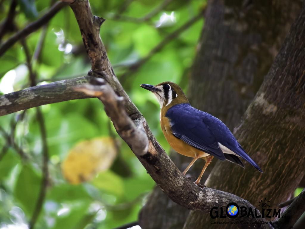 FeaturedImage_OHThursh_BirdingPost