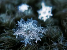 FeaturedImage_Snowflake