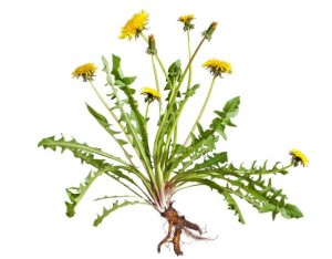 EcoGarden_Weed