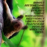 Quote_AnimalsInventedbyPlants_TerrenceMcKenna