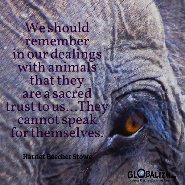Quote_AnimalsSacredTrust_HarrietBeecherStowe