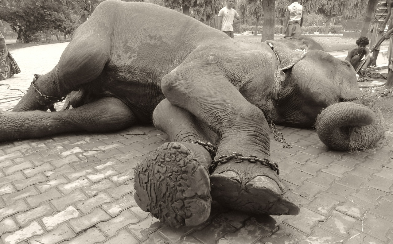 Raju_before_rescue_by_WSOS_1