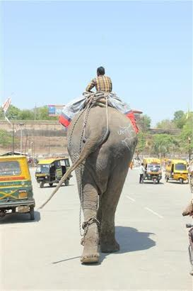 Raju_before_rescue_by_WSOS_3