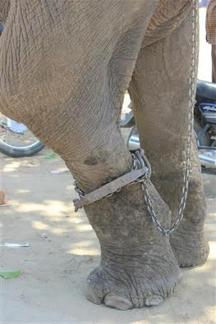 Raju_before_rescue_by_WSOS_7