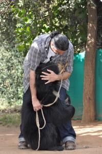kartick comforting a bear